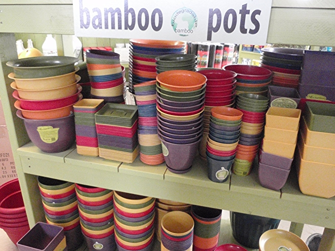Bamboo Pots; Photo by Cecilia Nasti