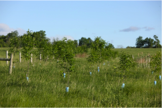 More than 16,500 mixed hardwood trees have been planted at the farm. Mountain Meadows are working with Audubon Society to plant more bird-attracting trees and plant life.