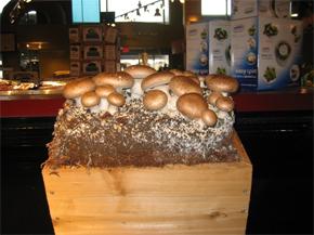 mushrooms7