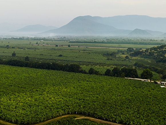 green farm with mountains in background