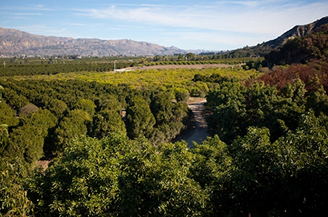 Sespe Creek Citrus Farm, Filmore, CA