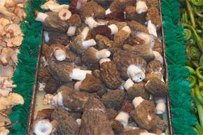 mushrooms4