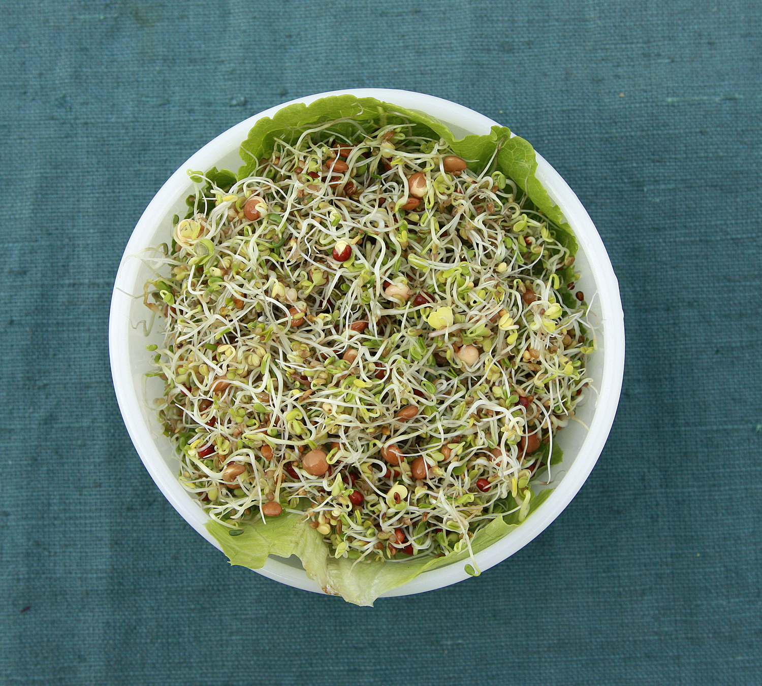 Spicy Sprout Salad