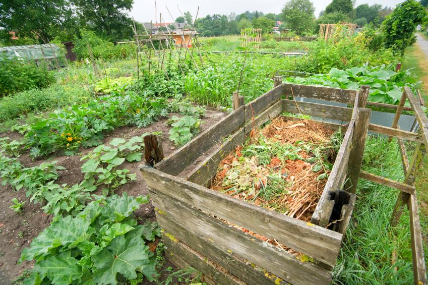 Compost: From Trash to Treasure; Photo by Cecilia Nasti