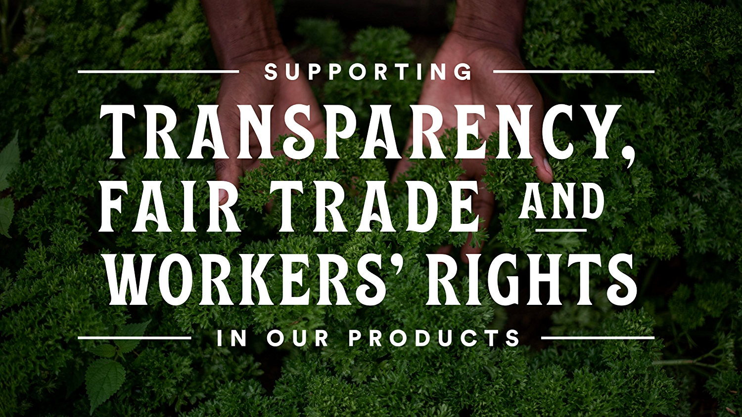 White text that says supporting transparency, fair trade and workers rights in our products