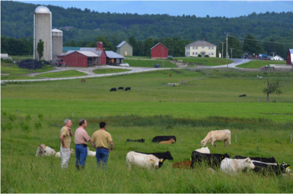 Brian (right), Amiel (left) and the Secretary of Agriculture for Vermont – Chuck Ross (middle) watching their Charolais-Angus herd