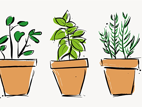 Illustration of potted herbs