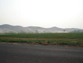 alfalfa_field
