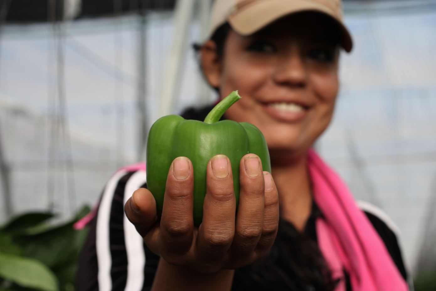 Divemex: Culiacán, Mexico | Erika Vianey Castillo Ramirez, 20, from Ejido Liertad, Sinaloa, holds a Whole Trade organic bell pepper.