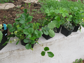 seedplants4