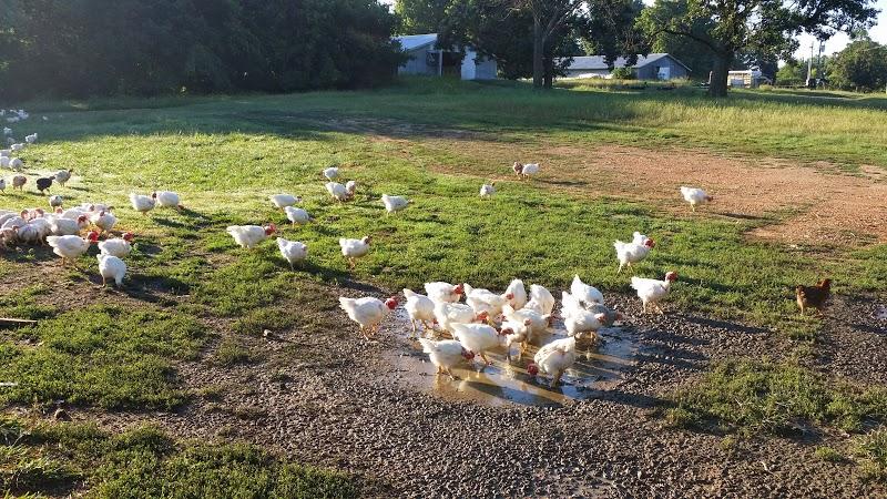 Crystal Lake Farms