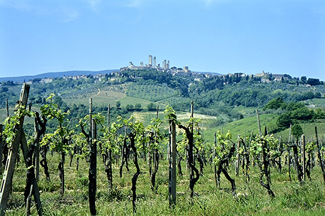 Tuscany Wine Region in Italy