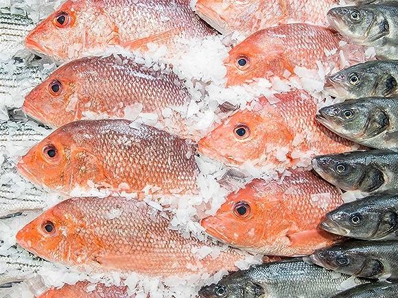 Fish in Ice Case