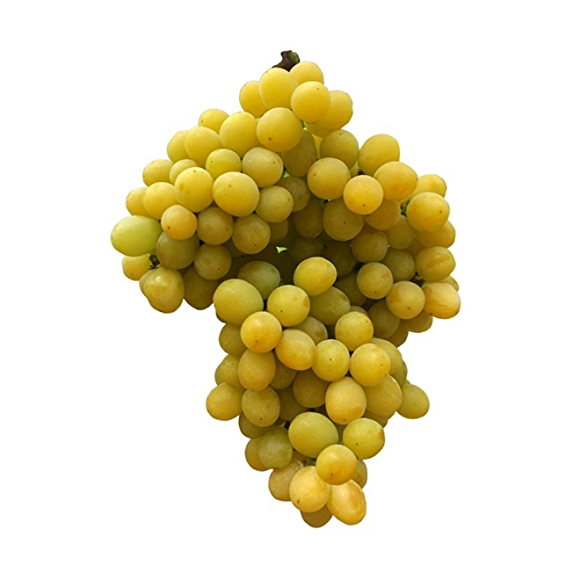Bunch of cotton candy grapes