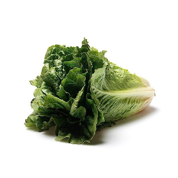 Romaine Lettuce 1