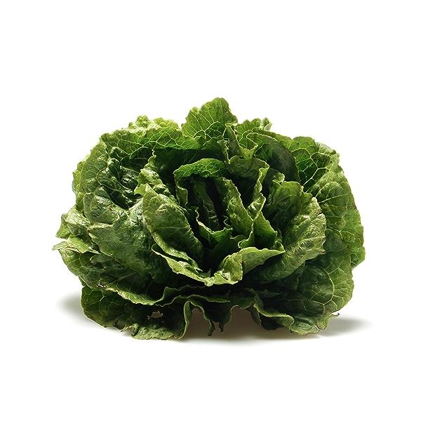 Romaine Lettuce 3