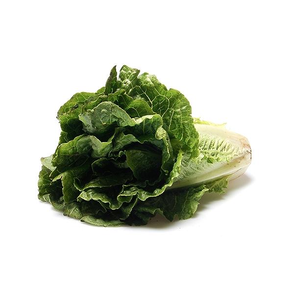 Romaine Lettuce 2