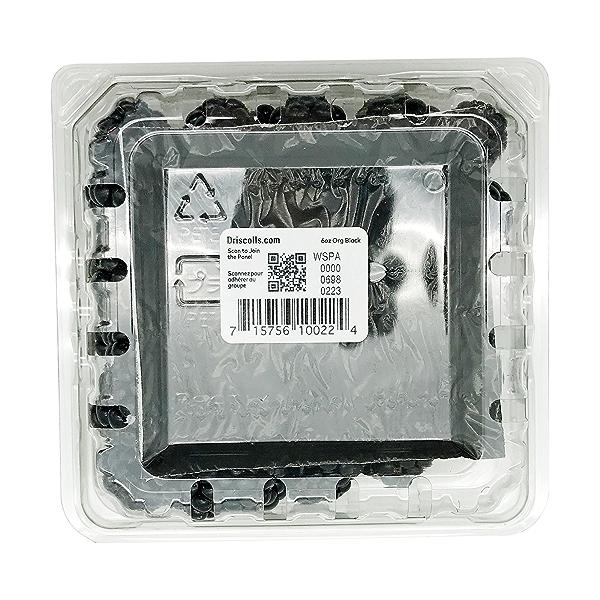 Organic Blackberries 2