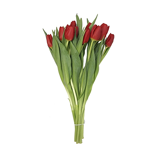 Tulips 10 Stem 1