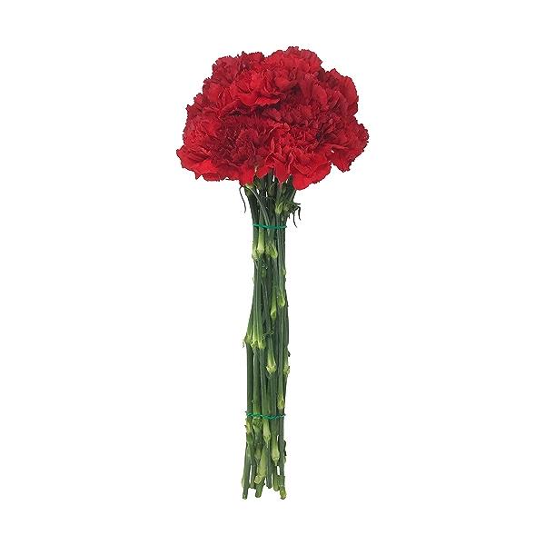 Mini Carnations 1