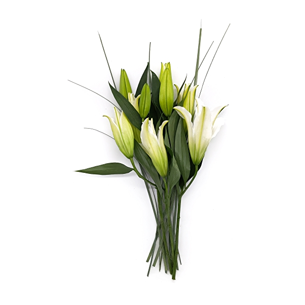Sourced For Good White Oriental Lily 1