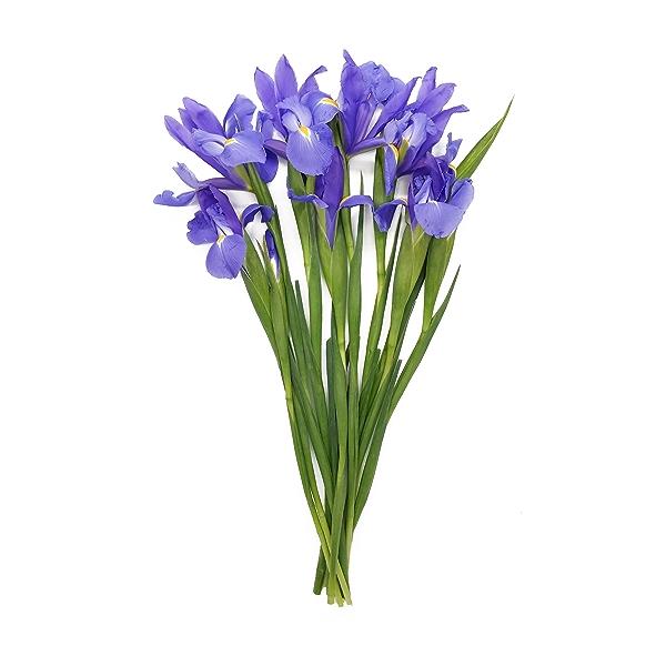 Iris Jumbo Bunch 1