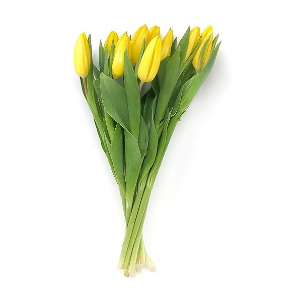 Tulips 10 Stems 1