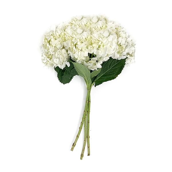 3 Stem White Hydrangeas 1
