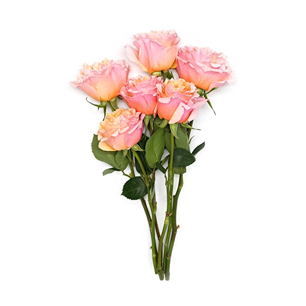 Sourced For Good Garden Roses 1