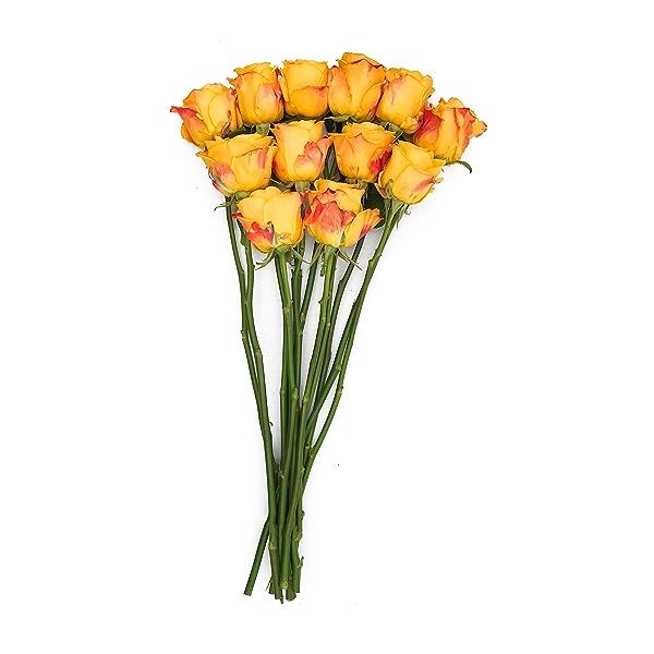 Sourced For Good 12 stem Premium Roses 1