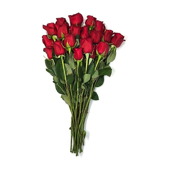 Double Dozen Roses 1