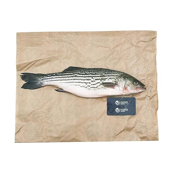 Whole Striped Bass 1