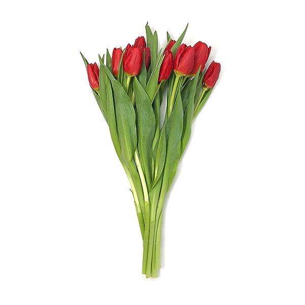 Tulip 10 Stem 1
