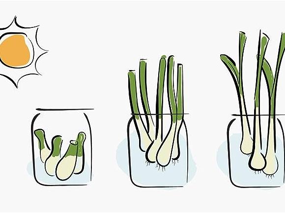 greens in jars