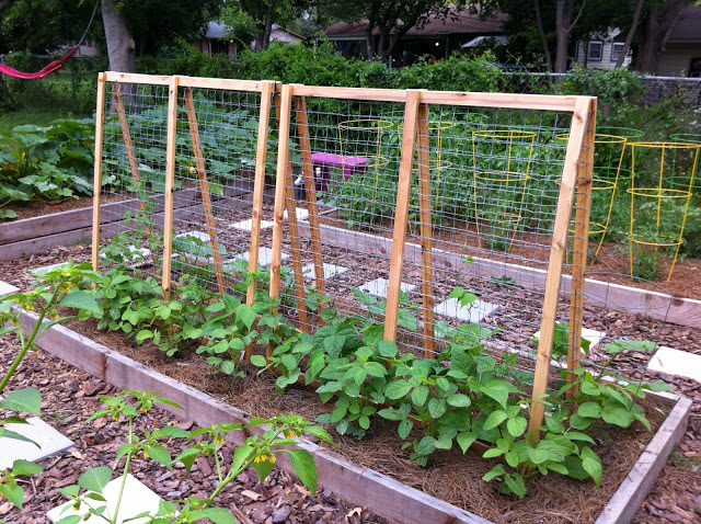 Diy Trellises If You Build It They Will Grow Whole