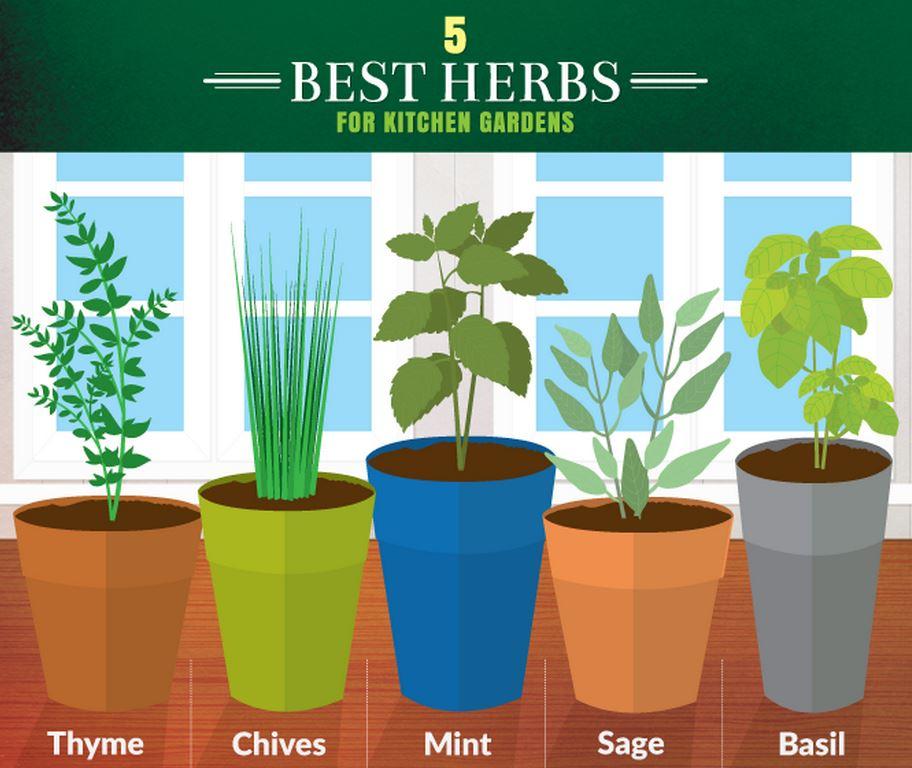 5 Herbs for Kitchen Gardens