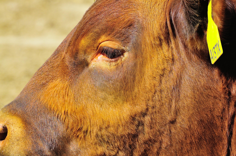 Bull face   Photo by Liz Fry