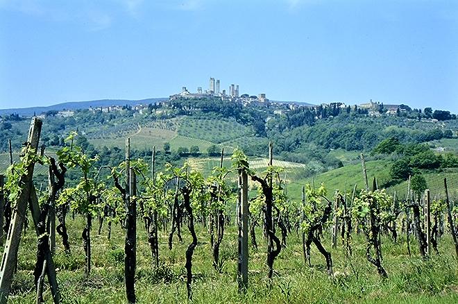 Tuscany Wine Region in Italy