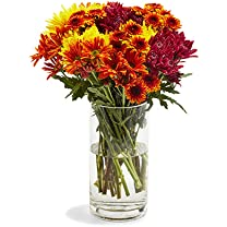 Product image of 15-Stem Fall Rainbow Poms
