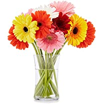 Product image of Whole Trade 15-Stem Rainbow Gerbera Daisies