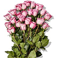 Deals on Whole Trade Double Dozen Bunch of Roses
