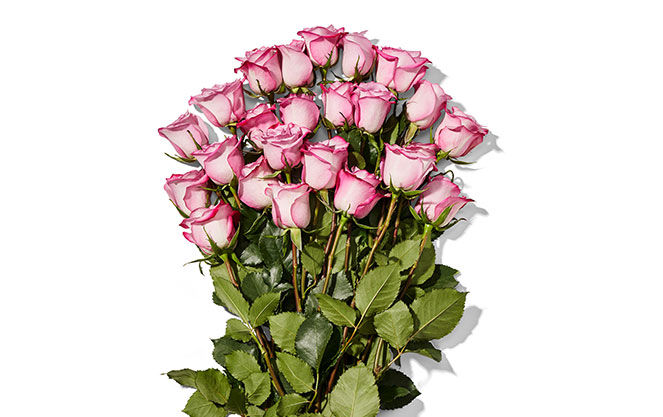 Amazon Prime Members: 2-Dozen Whole Trade Roses