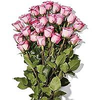 Double Dozen Bunch of Roses Deals