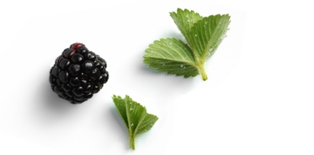 Image of fresh berry and mint