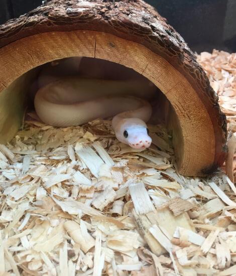 Best Snake Shelter