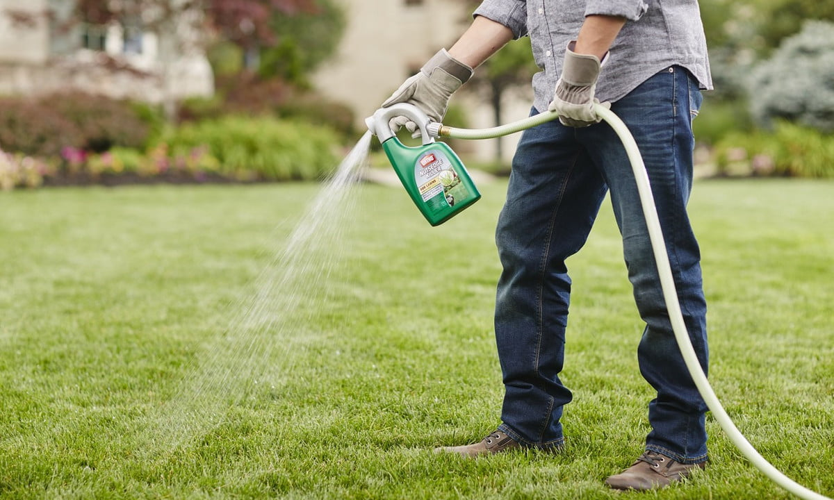 The best lawn weed killers