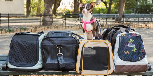 The Best Travel Carrier for Cats and Small Dogs
