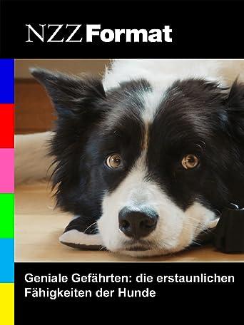 NZZ Format - Geniale Gefährten: die erstaunlichen Fähigkeiten der Hunde