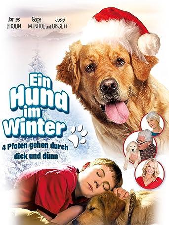 Ein Hund im Winter