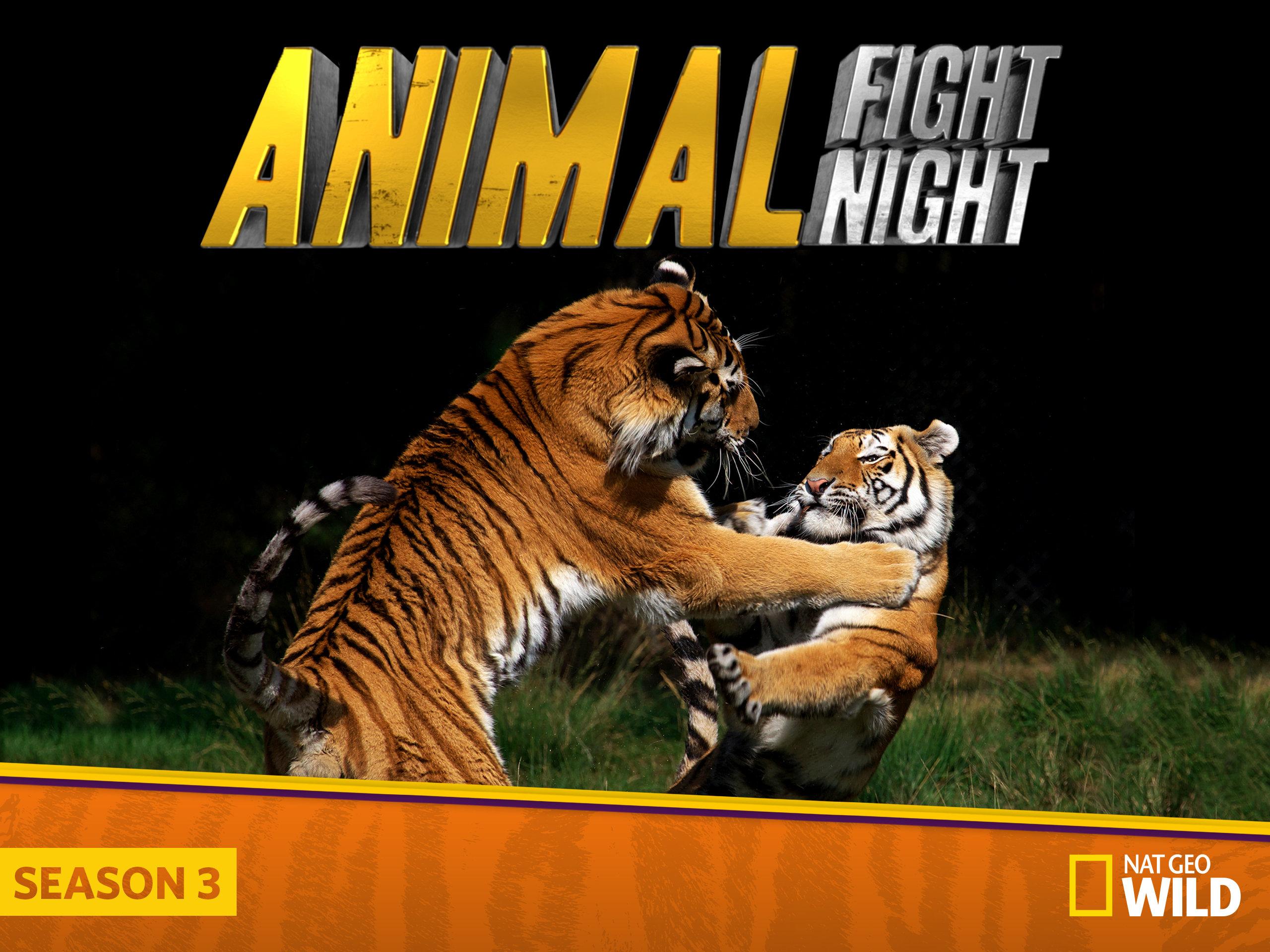Watch Animal Fight Night Season 3 Episode 2: Brutal Brawls